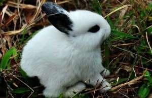 新买兔兔的正确喂养方法
